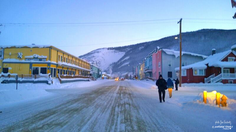 Arctic Discovery Tour - Nature Tours of Yukon- Dawson City