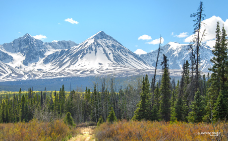 day trips nature tours of yukon