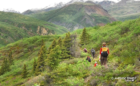 nature tours of yukon - kluane base camp hiking tours
