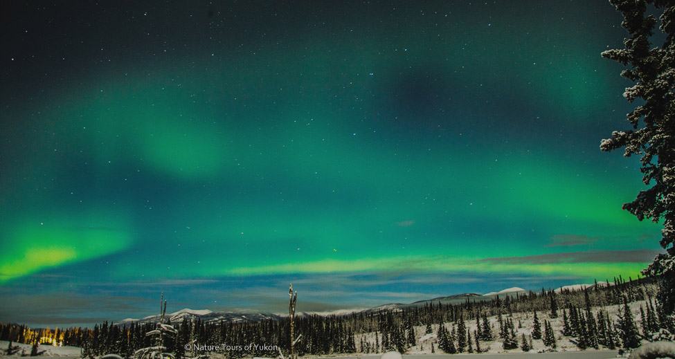 auroraborealisyukon - aurora hunt / northern lights viewing