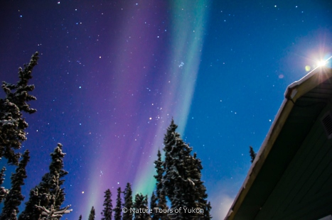 aurora borealis yukon - aurora hunting - nature tours of yukon