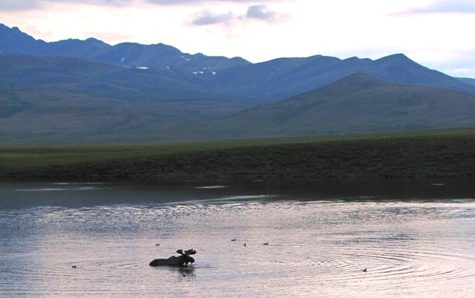 Arctic Explorer tour. Nature Tours of Yukon