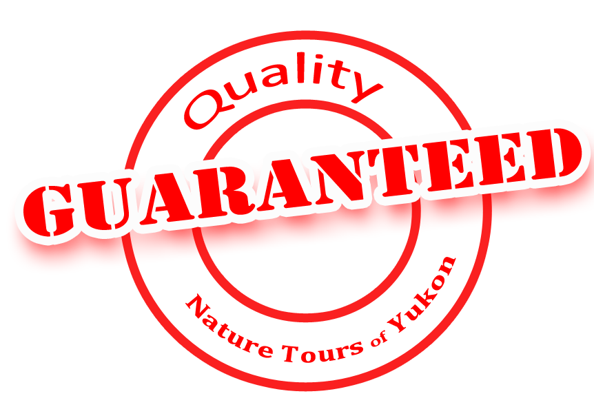 quality guaranteed by nature tours of yukon