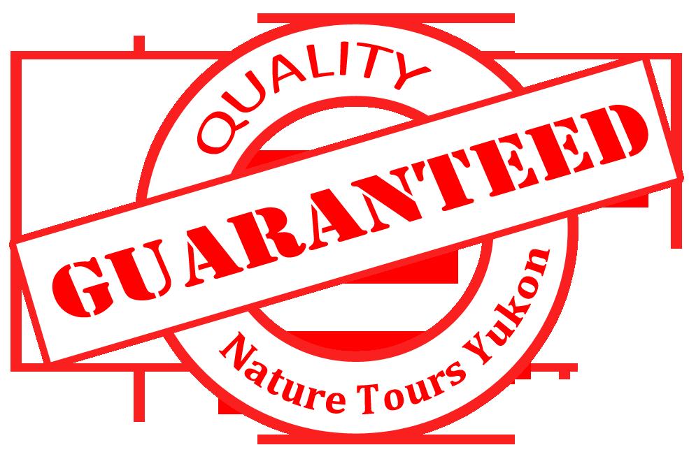 Quality Tours aurora borealis in Yukon