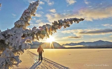 yukon winter - canada