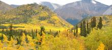 Autumn Colours in Yukon