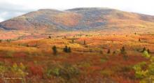 Tundra at Dempster Highway-Yukon