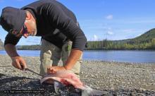 Fishing Yukon
