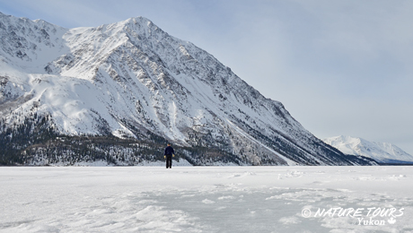 Kluane National Park - winter day trip