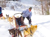 aurora borealis tours yukon. Day trips - dog sledding