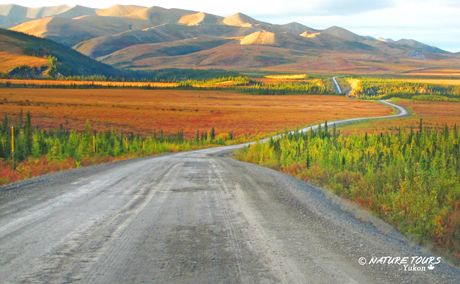 Arctic Road Trip- Fall edition.