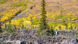 Fall Colours in Kluane