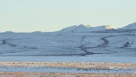 Caribou at the Arctic Circle, Yukon, Canada