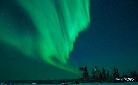 Arctic Circle   guided winter road trip   Aurora & Dempster