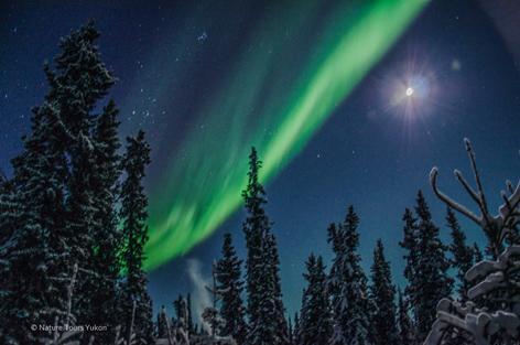 Aurora Borealis in Winter Wonderland Yukon, Canada - Christmas Aurora Package Nature Tours Of Yukon |